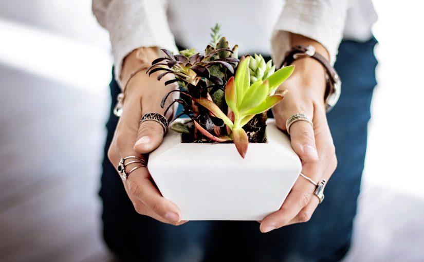 Comment déménager ses plantes sans les abîmer?